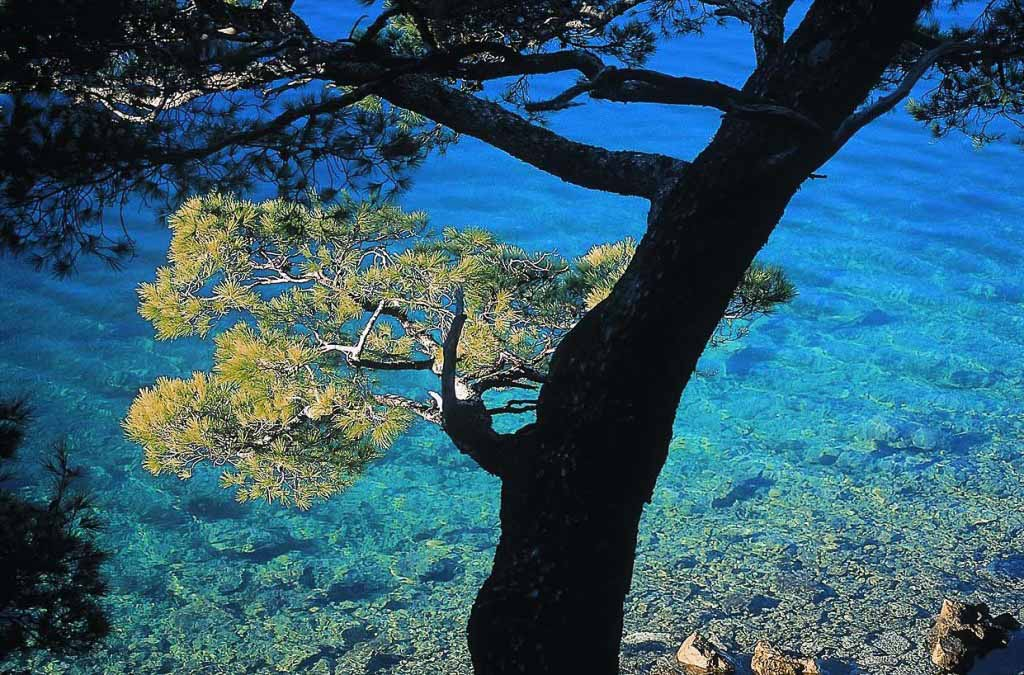 Mljet by Ivo Pervan via Croatian National Tourist Board
