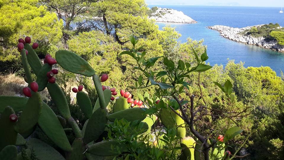 Restaurant Stermasi, Mljet Island, Dubrovnik Riviera 2