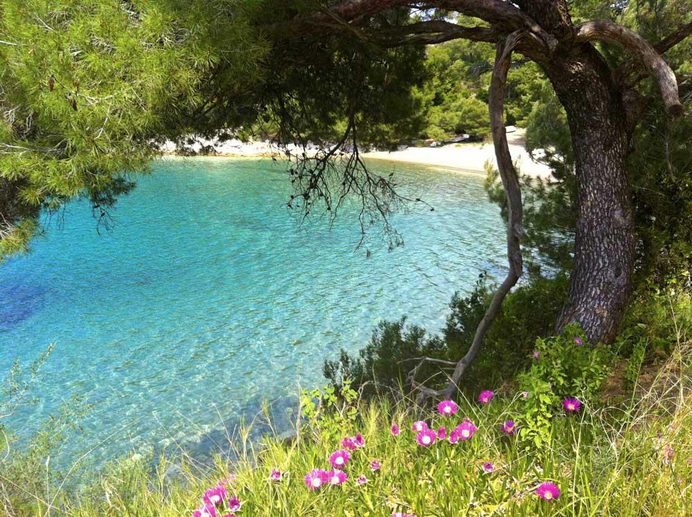 Saplunara Beach, Mljet Island  (2)