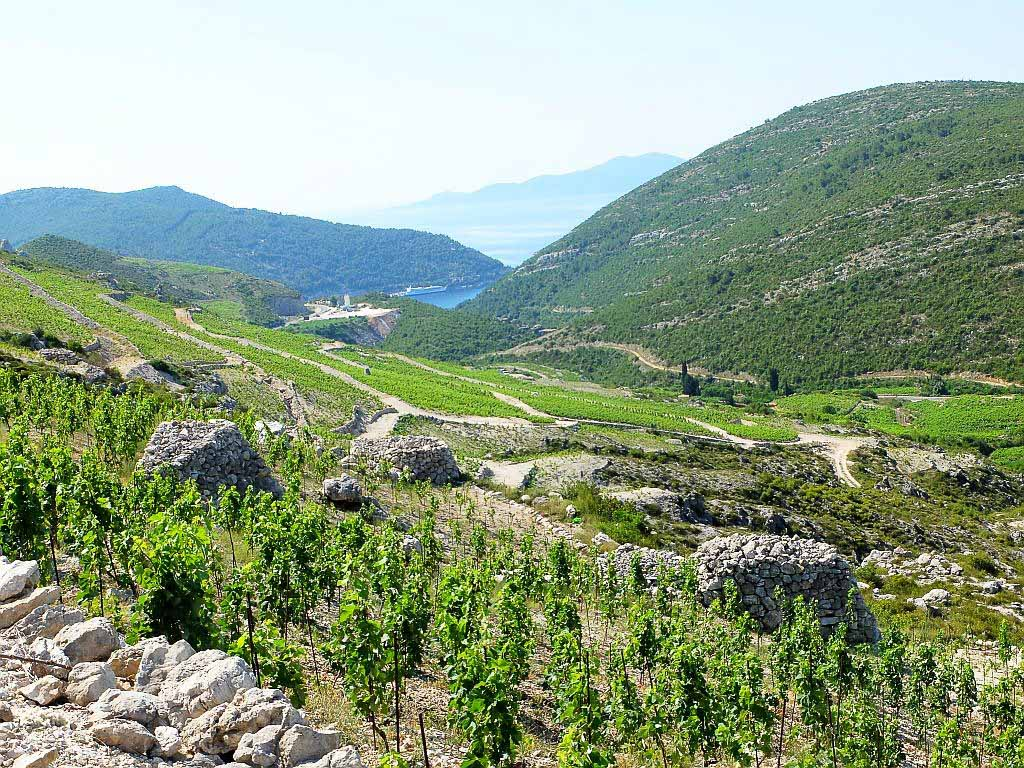 Vineyards, Peljesac Peninsula, Dubrovnik Wine Tour (2)