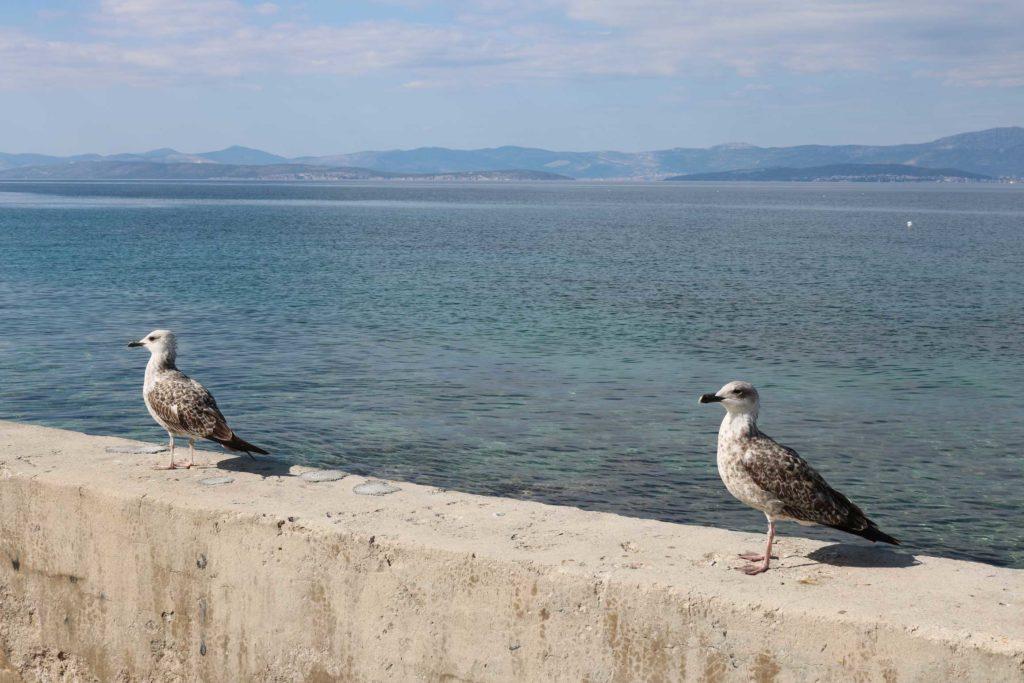 sutivan-beach-brac-island-12