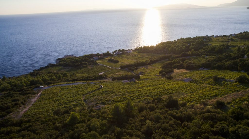 Wine Lovers Tour Peljesac Peninsula (2)