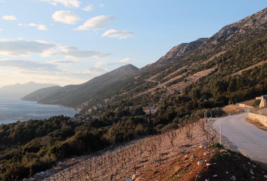 Dingac, Wine Region, Peljesac Peninsula (2)