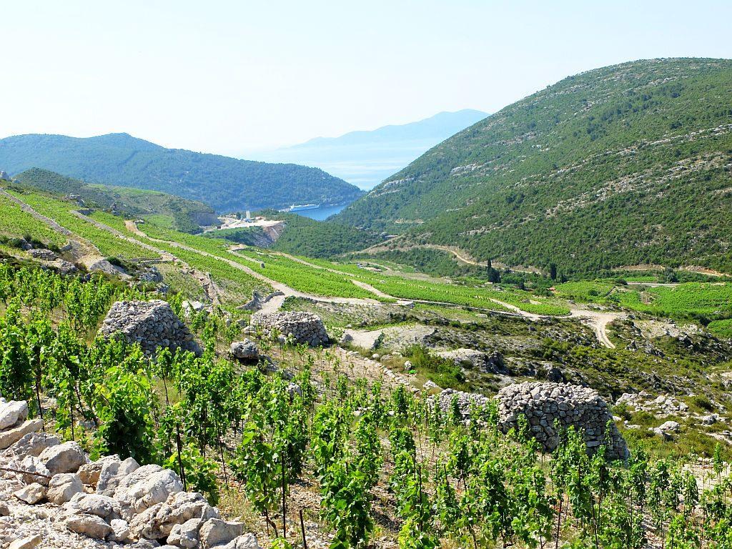 Peljesac Peninsula Wine Region (1)
