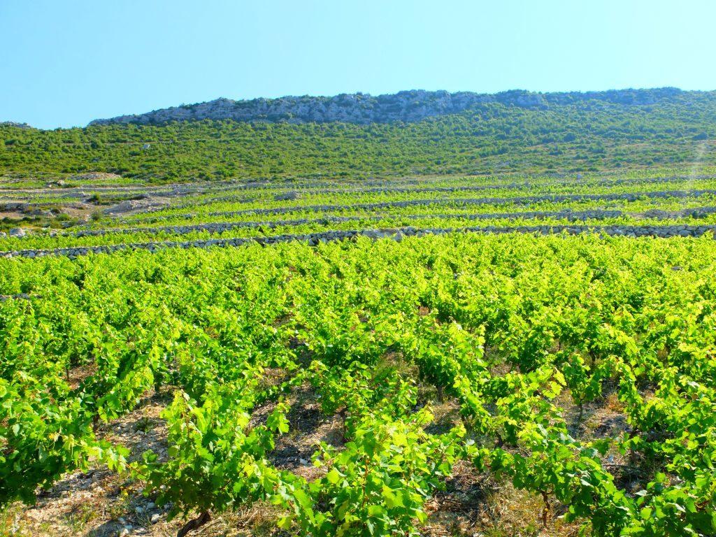 Peljesac Peninsula Wine Region (3)
