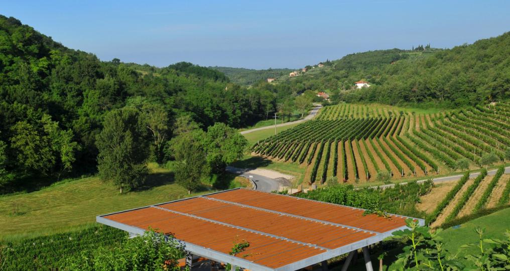 Winery Kozlovic.PNG 4