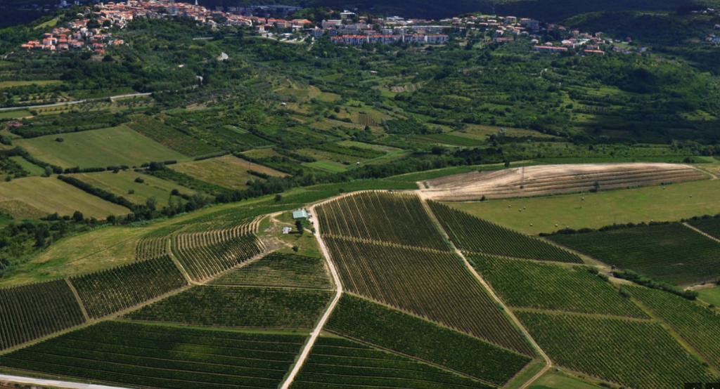 Winery Kozlovic.PNG 7