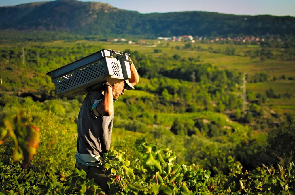 Best of Peljesac Peninsula Wine Country, Wine Tasting Exciursion (3)