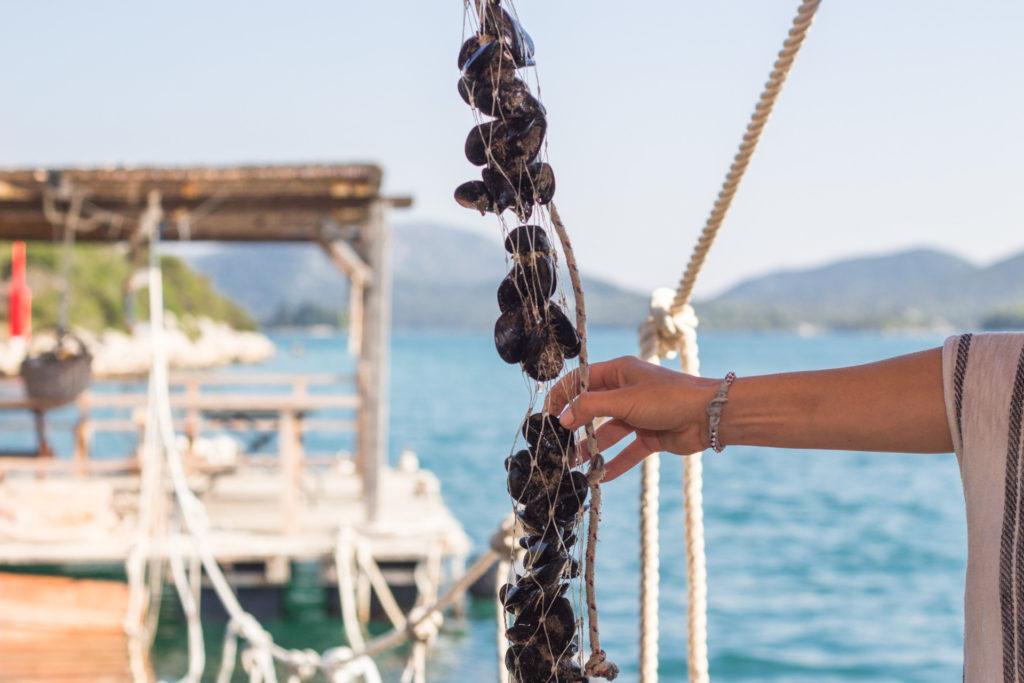 Best of Peljesac Peninsula Wine Country, Wine Tasting Exciursion (6)