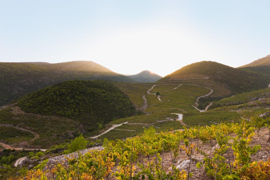 Best of Peljesac Peninsula Wine Country, Wine Tasting Exciursion (9)