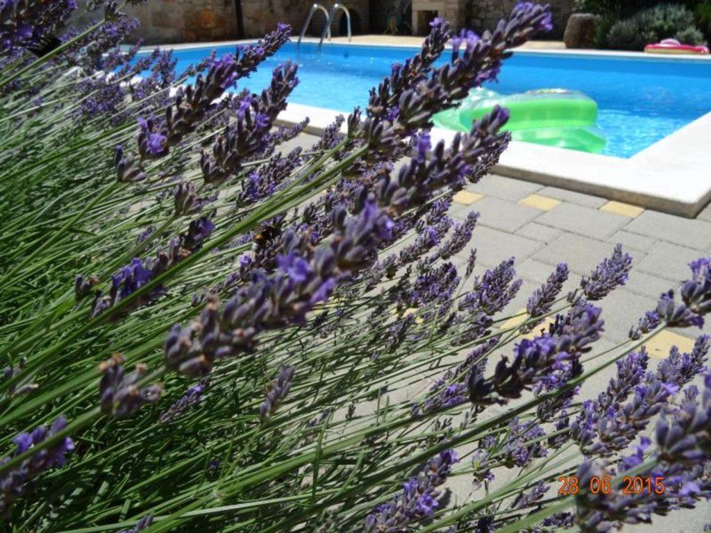 Villa Angelo, Near Porec, Istria (3)